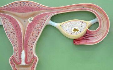 Лечение гиперплазии эндометрия медикаментами, без выскабливания