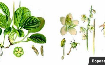 Как эффективно лечить эндометриоз травами и не навредить