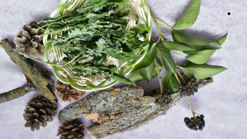 Трава чистотел при болезнях матки