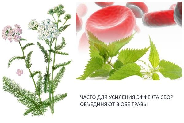 Сбор трав из крапивы и тысячелистника