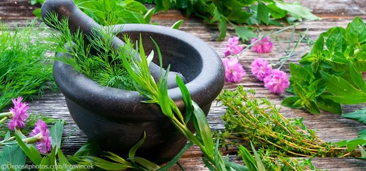 Сбор лечебных трав для лечения доброкачественной опухоли матки