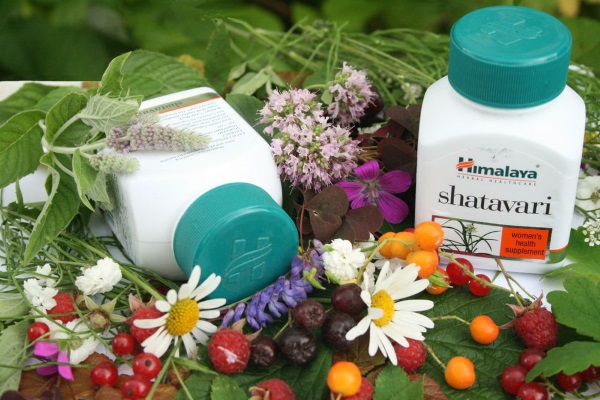 Шатавари - растение, которое лечит женские болезни матки