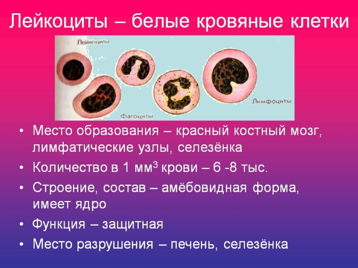 Лейкоциты растут и миома рассасывается