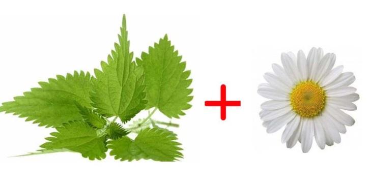 Крапива и Ромашка входит в состав рецепта для кисты шейки матки
