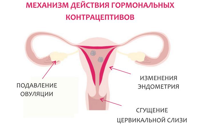 Действие оральных контрацептивов