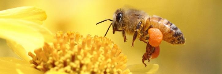 Продукты пчеловодства при лейомиоме