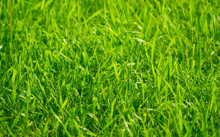 Лечение кисты яичнико обычной травой