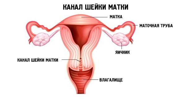 Канал шейки матки