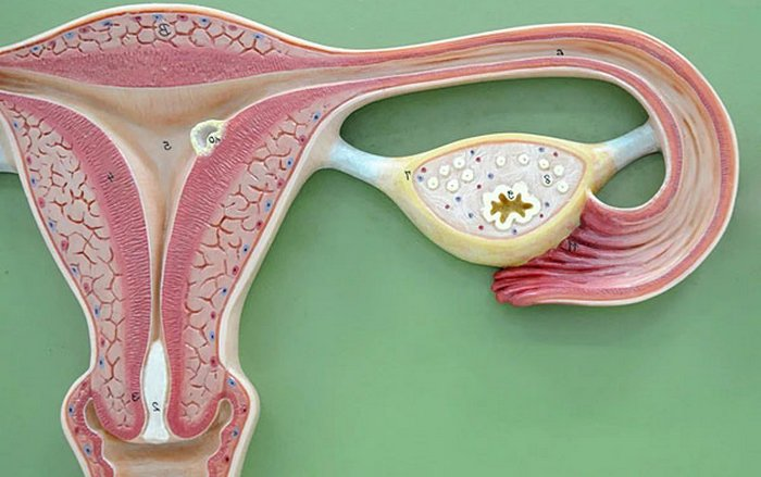 Миома шейки матки лечение медикаментами