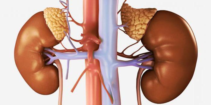 Надпочечная недостаточность как причина атипичной гиперплазии