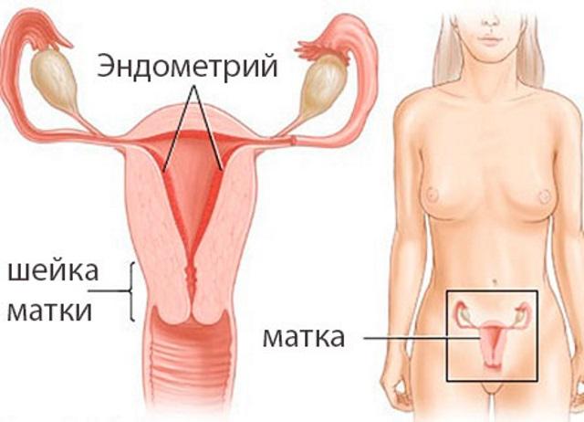Тонкий эндометрий матки и беременность