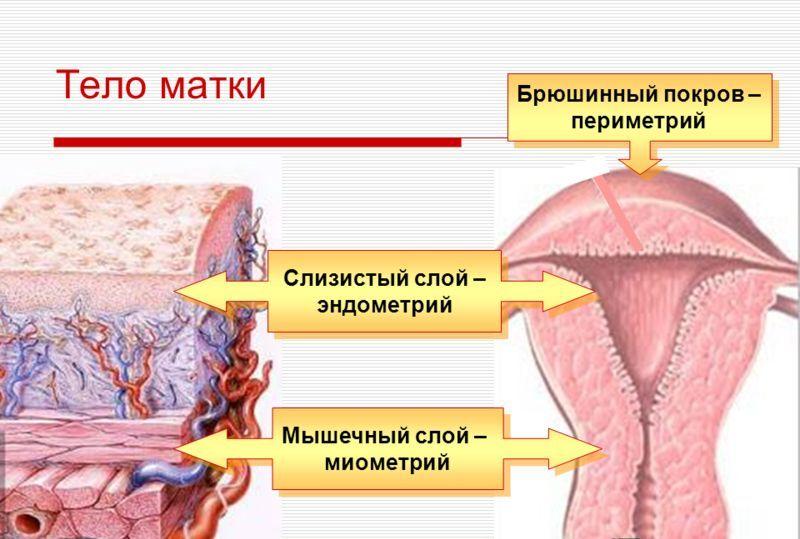 Миометрий неоднородный: структура на узи, причины патологий, восстановление