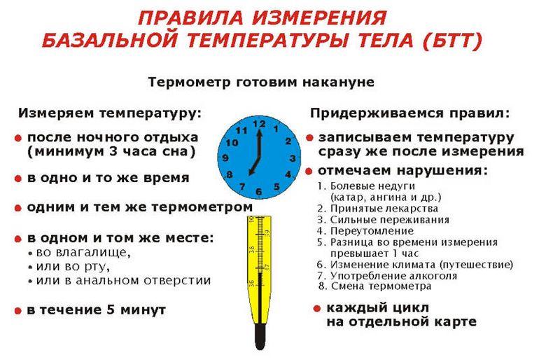 как измерить базальную температуру тела