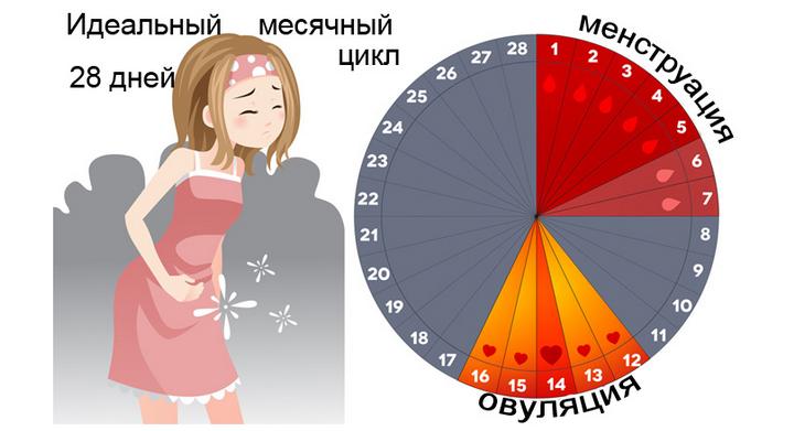 Цикл месячных, норма после гистероскопии