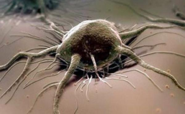 онкология в организме