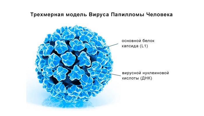 Вирус ВПЧ при эрозии шейки матки
